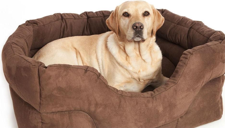 Dog Training For Essex Suffolk Ltd